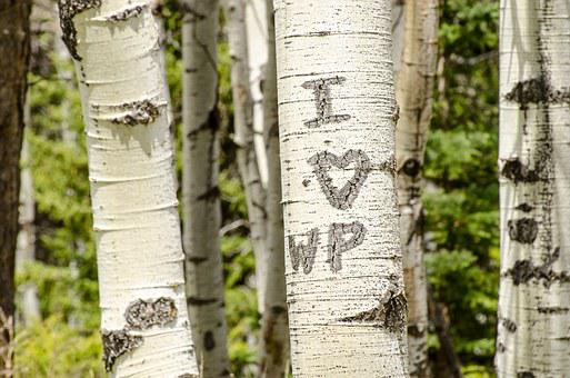 Carved Initials, Trees, Bark, Initials, Love, Heart