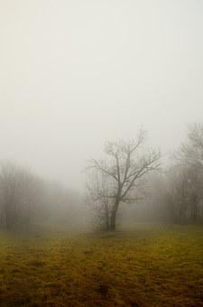 Tree, Fog, Dry Branch, Nature, Winter, Autumn, Forest
