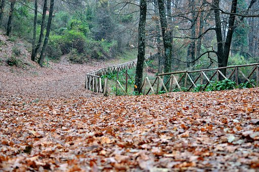 Forest, Autumn Woods, Leaves, Dried Leaves, Viale