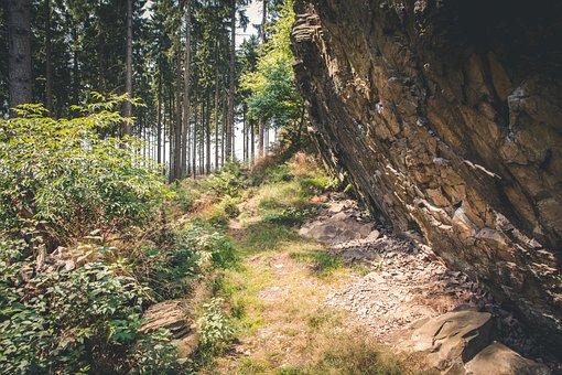 Rock, Forest Path, Forest, Nature, Hiking, Landscape