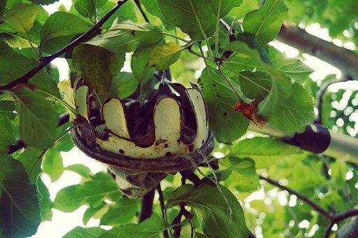 When, Fruit, Harvest, Pick, Tree, Fruit Tree, Garden