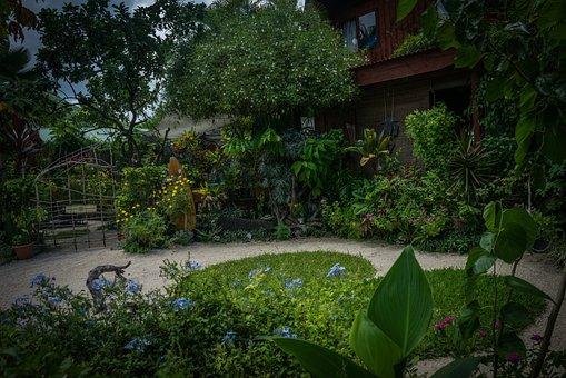 Bora-bora, Garden, Nature, Green, Plant, Flowers