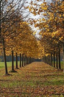 Autumn, Leaves, Leaf, Colors, Yellow, Tree, Orange