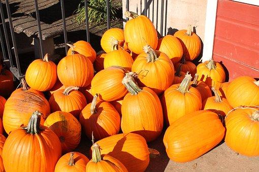 Pumpkins, Fall, Autumn, Orange, Halloween, Holiday
