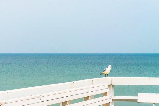Seagull, Sea, Sky, Blue, Gull, Water, Bird, Freedom