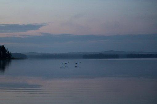 Swan, Night, Peace, Silence, Finnish, Nature, Autumn