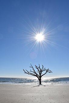 Sun, Tree, Ocean, Glaring, Sky, Sunlight, Desolate