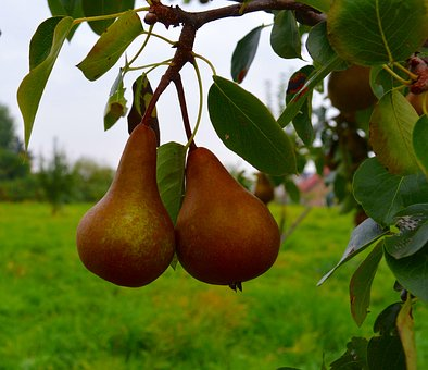 Pears, Fruit, Pear Compote, Ripe, Sweet, Compote
