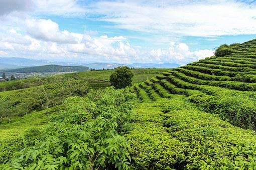 The Development, The Countryside, The Farm, Vietnam