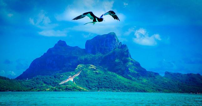 Bora Bora, French Polynesia, Tropical, Bird, Sky, Ocean
