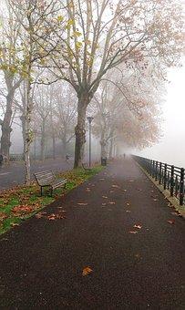 Fog, Park, Autumn, Winter, Trees, Leaves, Viale, Tree