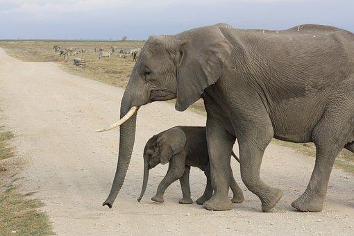 Elephant, Baby, Africa, Kenya, Amboseli, Park, Safari