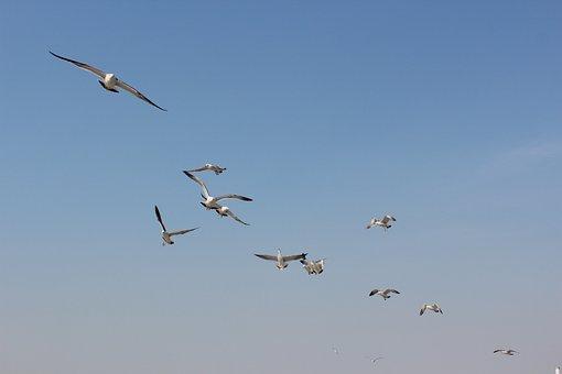 Seabirds, The Sea, Dalian