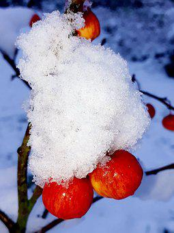 Embellishment, Snow, Snow Crystals, Branch, Winter
