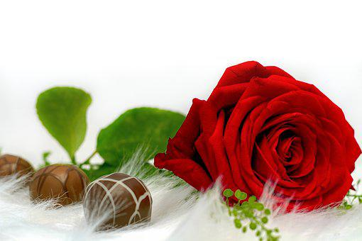 Rose, Chocolate, Love, Nibble, Delicious, Sweet, Flower