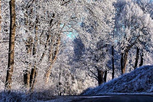 Hoarfrost, Winter, Allgäu