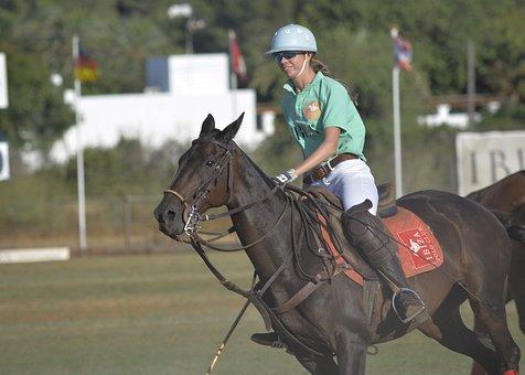 Horse, Horses, Polo, Polo Sport, Gallop, Horses Running