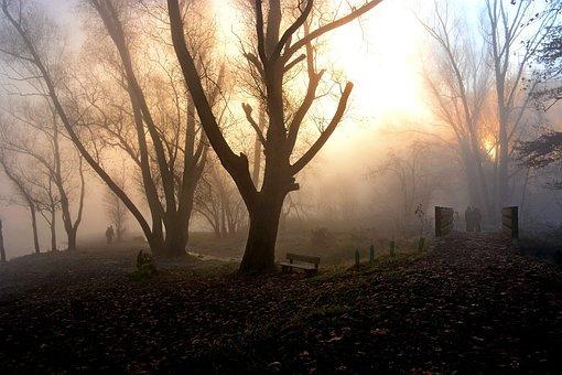 Fog, Light, Nature, Backlight