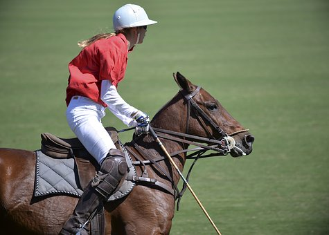 Horse, Polo, Sport, Player, Horses, Luxury, Polo Sport