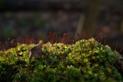 Nature, Plant, Forest, Close-up, Outdoors, Swamp, Moss