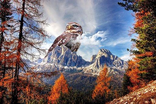 Owl, Mountain, Bird, Animal, Wild Animal, Photo Editing