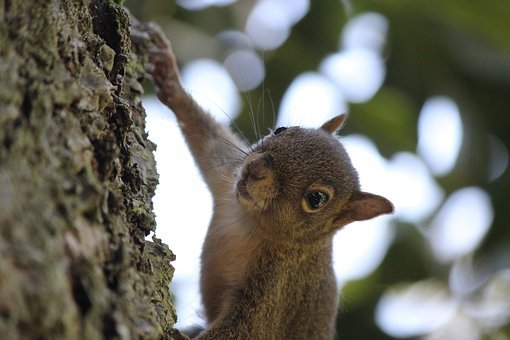 Squirrel, Nuts, Nature, Animal, Animal World, Mammal
