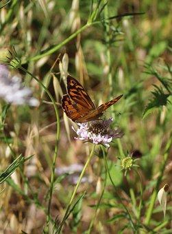 Butterfly, Orange, Black, Wildflower