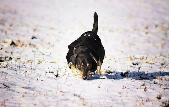 Doggy, Winter, Animal, Pet, Puppy, Snout, Shape, Sight