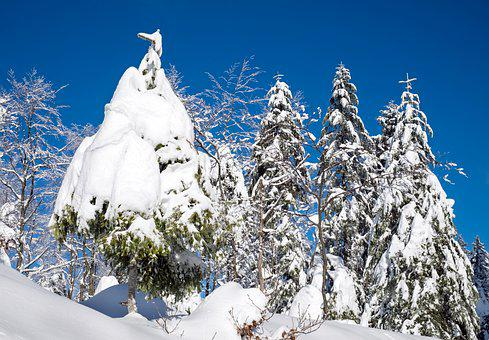 Wintry, Snow, Firs, Snowy, Time Of Year, Winter, Cold