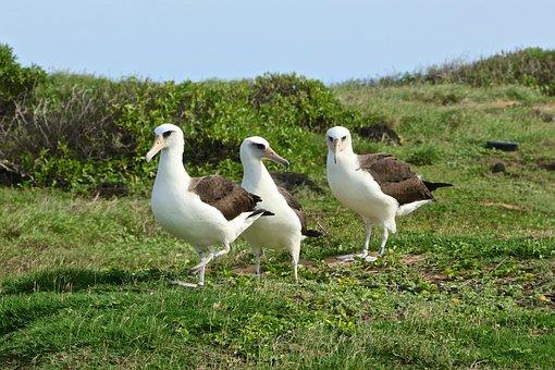 Nature, Hawaii, Wild, Bird, Animals, Free-range
