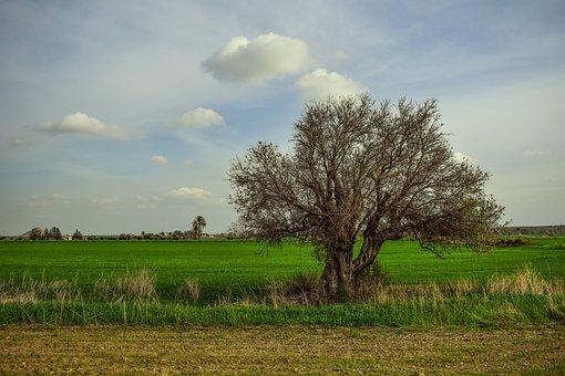 Tree, Landscape, Nature, Fields, Winter, Scenery, Rural