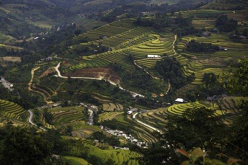 Blind Stretch Comb, Lao Cai, Yen Bai, Vietnam, Soil