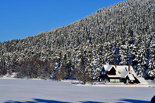 Winter, Snow, Snow Landscape, Tree, Abant, Turkey
