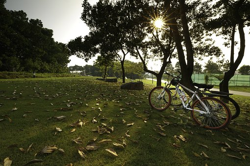 Mùathu, Yellow Leaves, Lonely, Alone, There, Bike