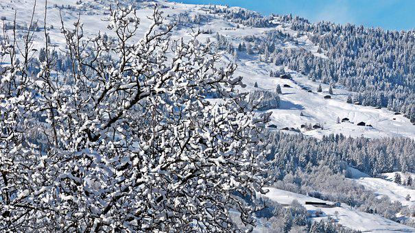 Switzerland, Alpine, Mountains, Trees, Firs, Imposing