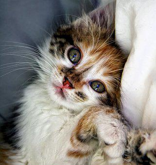 Cat, Kitten, Animals, Animal, Domestic Animal, Cute