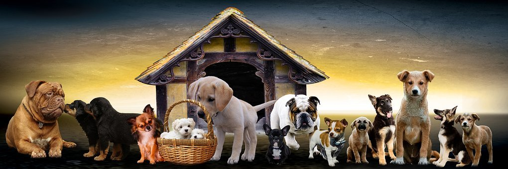 Animals, Dogs, Puppies, Dog Kennel, Cute Puppy, Family