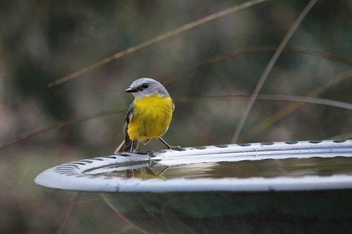 Bird, Robin, Nature, Animal, Wildlife, Wild, Beak