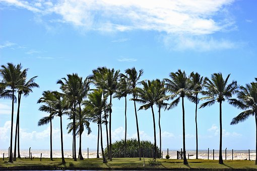 Islets, Bahia, Brazil, Beach, Mar, Trip, Landscape