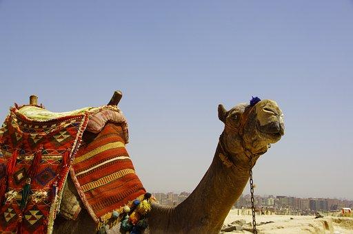 Camel, Mammal, Travel, Dromedary, Desert, Animal