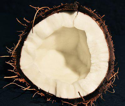 Coconut, Diet, Fetus, Tropics, Shell, Palm, Nuts