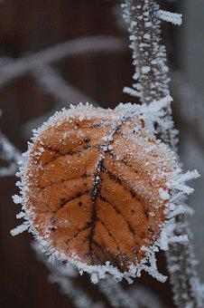 Winter, Rime, Frost, Pf 2018, Snow, Icing, Nature