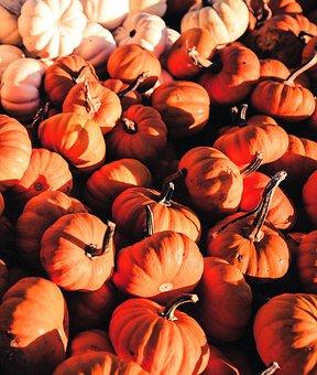 Pumpkin, Pumpkins, Orange, White, Halloween, Autumn