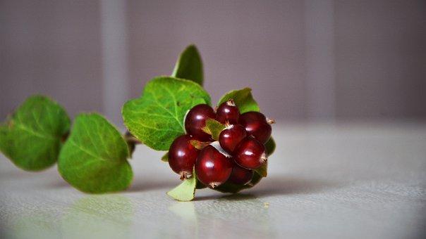 Wild Fruit, Fruit, Fresh, Healthy, Red Fruit, Nature