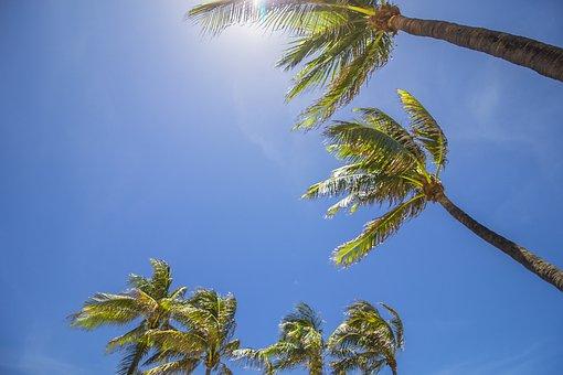 Miami, Palm Trees, Summer, Palm, Tropical, Beach, Tree