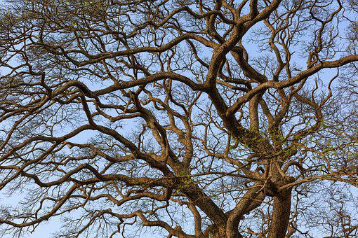 The Dry Tree, Mùathu, Sky, Green, Twigs, Dry Leaves