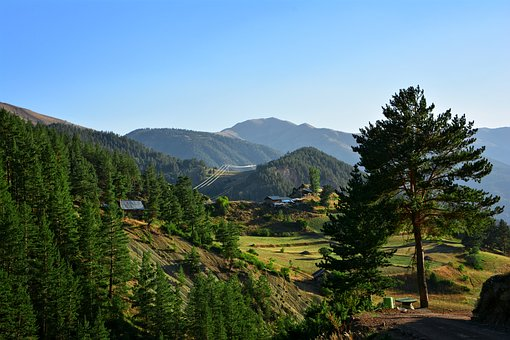 Forest, Highland, Nature, Landscape, Green, Blue, Tree