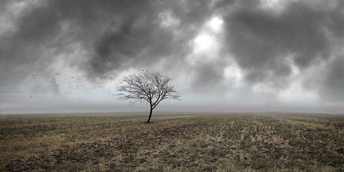 Field, Tree, Leaves, Sky, Landscape, Grass, Nature