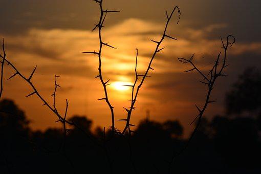 Sunset, Silhouette, Sun, Thorns, Landscape, Nature