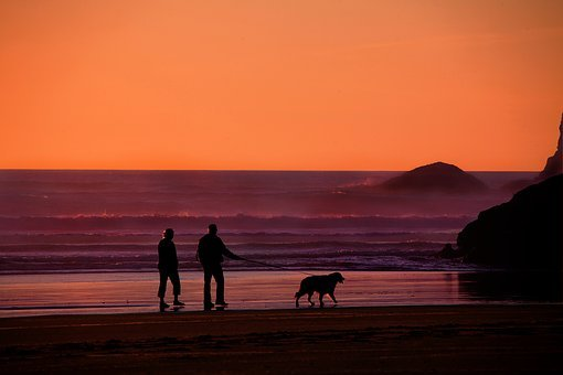 Grandparents, Walking The Dog, Dog, Pet, People